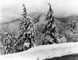 Heavy snow in the Great Smoky Mountains