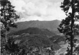View of Mt. LeConte with trees and valley in the foreground