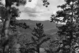 View of Mt. LeConte with trees in the foreground