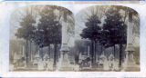 Gray's Cemetery, Knoxville, TN.  [Old Gray Cemetery]