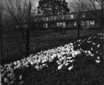 Riverside Poultry Farm, 1925