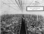 Baum's Bearden Greenhouses, 1929