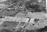 Baum's Bearden Greenhouses looking east, 1948